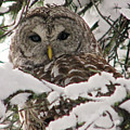 What A Hoot by Lisa Jacob