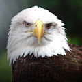 Where Eagles Dare 4 by Randy Matthews
