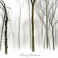 White Christmas by Jessica Jenney