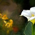Awakening Flower by Maria Coulson