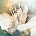 White Lily by Lali Kacharava