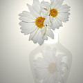 White On White Daisies by Joyce Dickens