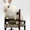 White Rabbit  by Yedidya yos mizrachi
