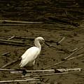 White Snowy Egret by Robert Hamm