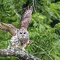 Whooo Goes There by Linda Shannon Morgan
