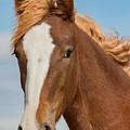 Wild Foal by Kent Keller