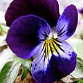 Wild Ground Flowers by Debra     Vatalaro