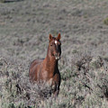 Wild Horse by Gary Wing