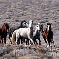 Wild Horses by Inga Spence
