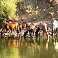 Wild Horses by Joshua Bales