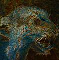 Wildcat by David Lee Thompson