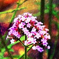 Wildflower  by MaryLee Parker