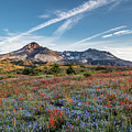Wildflowers At Mt. St. Helen's by Michael Holly