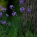 Wildflowers by Carol Turner