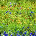 Wildflowers In Bloom by D Davila