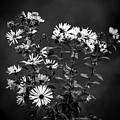 Wildflowers by Robert Mitchell