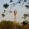 Windmill by Suzette Munson