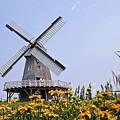 Windmill by Teresa Zieba