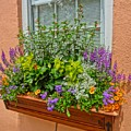 Window Box Blooms by Susan Bryant