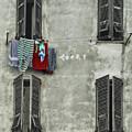 Windows by Shaun Wilkinson