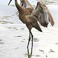 Winging It by Carol Groenen