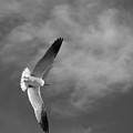 Wings by Don Spenner