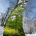 Winter And Summer by Oleksiy Maksymenko