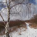 Winter Birch by Miroslav Nemecek