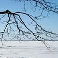 Winter by Masha Batkova