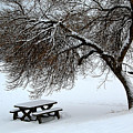 Winter Picnic by Roland Stanke