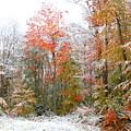 Winterfall  by Jane Merrit