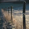 Wooden Posts by Bernard Jaubert