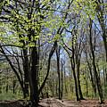 Woodland Walk England by Julia Gavin