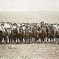 Wyoming: Cowboys, C1883 by Granger