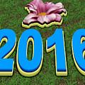 Year 2016 by Miroslav Nemecek