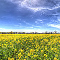 Yellow Fields Of Summer by David Pyatt