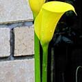 yellow Lily. by Joyce Woodhouse