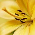 Yellow by Mihail Antonio Andrei