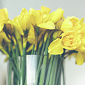 Yellow Narcissuses Bouquet In A Glass Vase by Dvoevnore Photo
