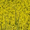 Yellow by Wanda Krack