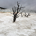 Yellowstone Mammoth Hot Springs by Pierre Leclerc Photography