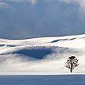 Yellowstone Winter by Doug Davidson