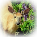 Young Buck Among The Lupin by David Patterson