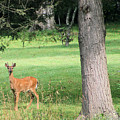 Young Buck by Carolyn Postelwait