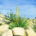 Yucca Tree by Edward Morden