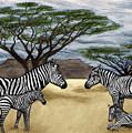 Zebra African Outback  by Peter Piatt