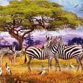 Zebras by MGL Meiklejohn Graphics Licensing