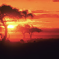 African Sunrise by Michele Burgess