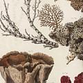 Aquatic Animals - Seafood - Algae - Seaplants - Coral by Art Makes Happy