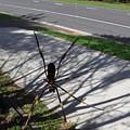 Australia - The Spider by Jeffrey Shaw